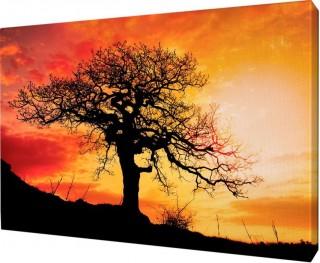 Картина на холсте 40х50 д916